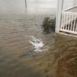 Shark Swimming in the Streets of Margate, NJ