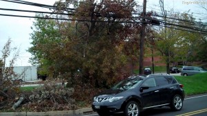 Tree Fell on Electric Lines in Montgomery County, PA